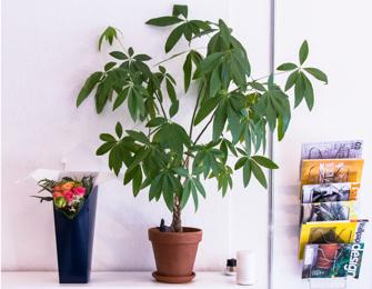 Studio plants and flowers